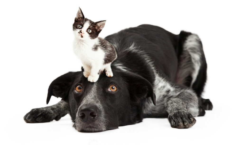 Dog and cat 3